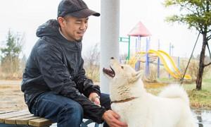 北海道犬 勇1歳♂